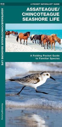 Assateague/Chincoteague Seashore Life: An Introduction to Familiar Plants & Animals