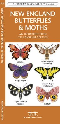 New England Butterflies and Moths: An Introduction to Familiar Species (Pocket Naturalist Series)
