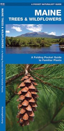 Maine Trees and Wildflowers: An Introduction to Familiar Species (Pocket Naturalist - Waterford Press)