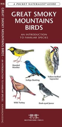 Great Smoky Mountain Birds: An Introduction to Familiar species (Pocket Naturalist Series)