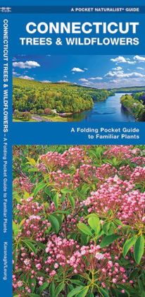 Connecticut Trees and Wildflowers: An Introduction to Familiar Species