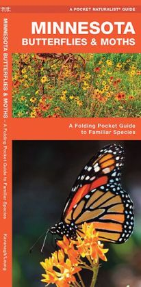 Minnesota Butterflies and Moths: An Introduction to Familiar Species
