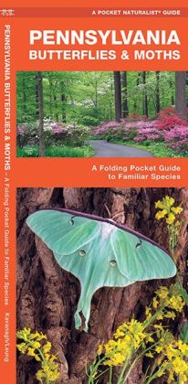 Pennsylvania Butterflies and Moths: An Introduction to Familiar Species
