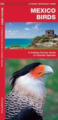 Mexico Birds: An Introduction to Familiar Species