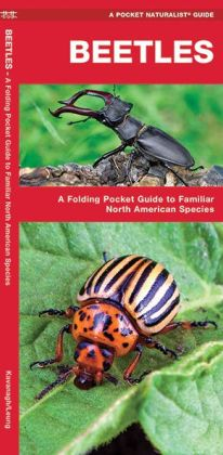 Beetles: An Introduction to Familiar Species