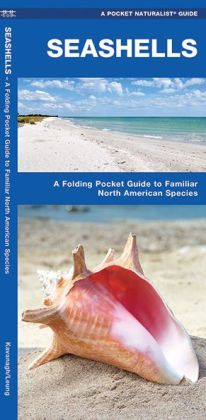 Seashells: A Folding Pocket Guide to Familiar North American Species