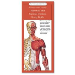 Anatomical Chart Company's Illustrated Pocket Anatomy: Muscular and Skeletal Systems Study Guide