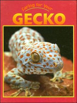 Caring for Your Gecko