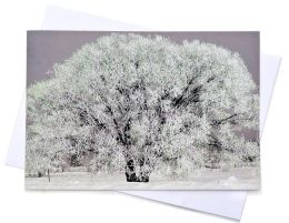 Frosty Tree Christmas Boxed Card