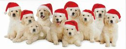 SANTA PUPS CHRISTMAS BOXED CARD