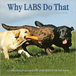 Why Labs Do That: A Collection of Curious Labrador Retriever Behaviors
