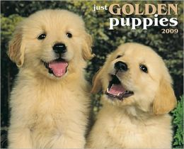 2009 Golden Puppies (Just) Wall Calendar