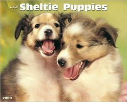 Just Sheltie Puppies