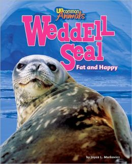 Weddell Seal: Fat and Happy