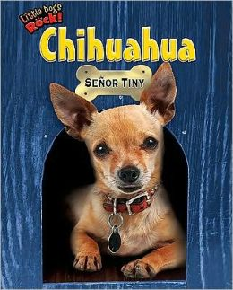Chihuahua: Señor Tiny