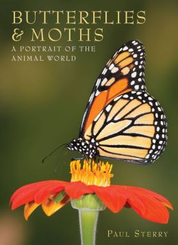 Butterflies & Moths: A Portrait Of The Animal World