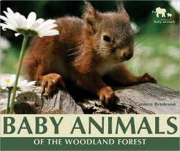 Baby Animals of the Woodland Forest