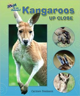 Kangaroos Up Close