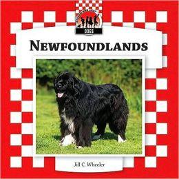 Newfoundlands