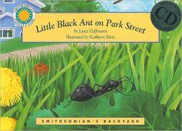 Little Black Ant on Park Street