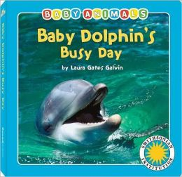 Baby Dolphin's Busy Day