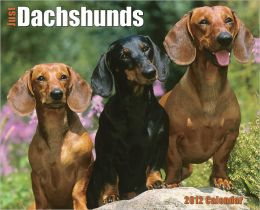 2012 Dachshunds Wall Calendar