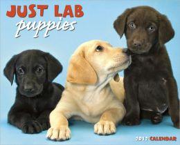 2012 Lab Puppies Wall Calendar
