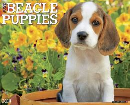 2014 Beagle Puppies Wall Calendar