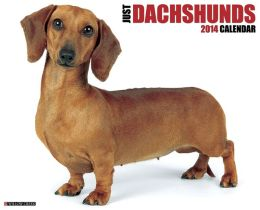 2014 Dachshunds Wall Calendar
