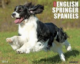 2014 English Springer Spaniels Wall Calendar