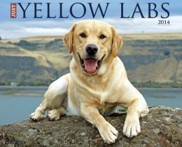 2014 Yellow Labs Wall Calendar