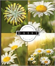 The Life Cycle of a Daisy