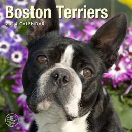 2014 Boston Terriers Wall Calendar