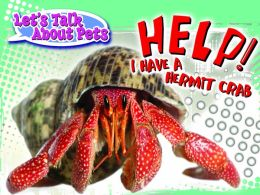Help! I Have a Hermit Crab