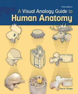 A visual analogy guide to human anatomy