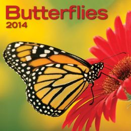 2014 Butterflies Mini Wall Calendar