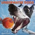 Book Cover Image. Title: 2015 Underwater Dogs Mini Wall Calendar, Author: Willow Creek Press, Incorporated