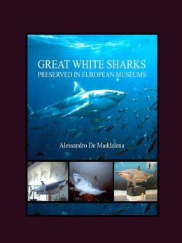 Great White Sharks Preserved in European Museums