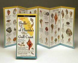 The Ultimate Guide to Florida 39 s Gulf Coast Shells and Beach Life by