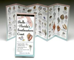 Ultimate Guide to Shells and Beach Life of Florida's Southeastern Coast