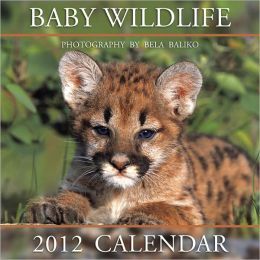 2012 Baby Wildlife Wall Calendar