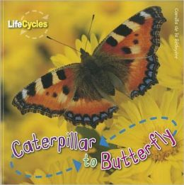 Caterpillar to Butterfly