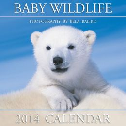 2014 Baby Wildlife Wall Calendar