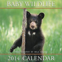 2014 Baby Wildlife Mini Wall Calendar