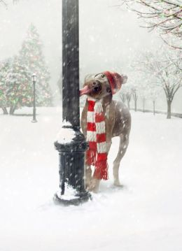 Dog Licking Pole Christmas Boxed Card
