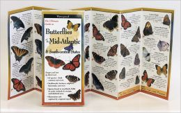 Common Butterflies of the Mid-Atlantic & South Central States