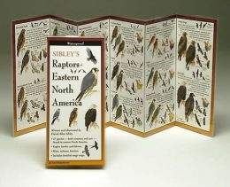 Sibley's Raptors of Eastern North America