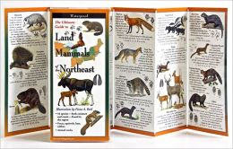 The Ultimate Guide to Land Mammals of the Northeast