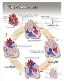 The Cardiac Cycle Wall Chart: 8140