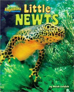 Little Newts